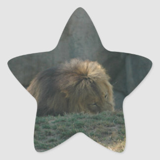 Lion in the grass star sticker