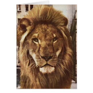 lion in town card