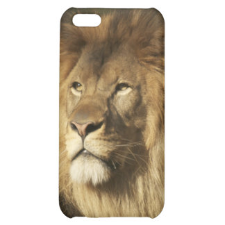 Lion iPhone 5C Cover