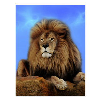 Lion King in Africa Postcard
