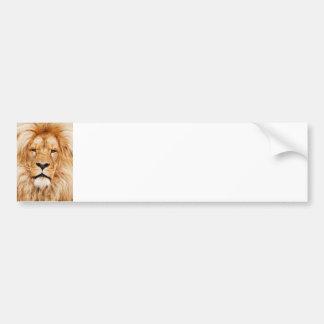 Lion King Of The Jungle Face Safari Africa Car Bumper Sticker