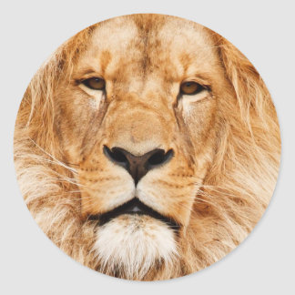 Lion King Of The Jungle Face Safari Africa Classic Round Sticker