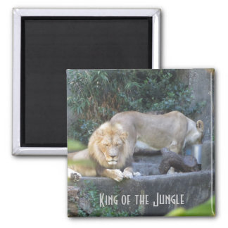 Lion, King of the Jungle Magnet