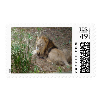 Lion King of the Jungle Postage Stamp
