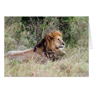 lion laze card