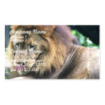 Lion Licking Business Cards