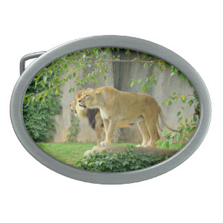 Lion Lioness Belt Buckle