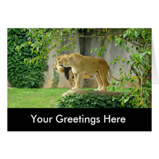 Lion Lioness Greeting Card
