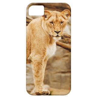 Lion Lioness iPhone 5 Case