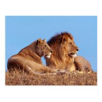 Lion & Lioness Postcard