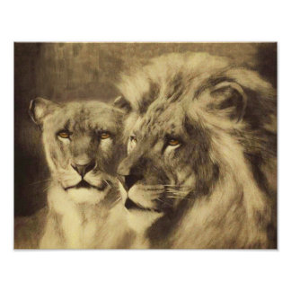 Lion Lioness Wild Animals Wildlife Poster
