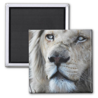 Lion listens to my heartbeat 2 inch square magnet