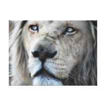 Lion listens to my heartbeat Africa Canvas Print