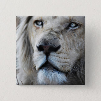 Lion listens to my heartbeat Africa Pinback Button