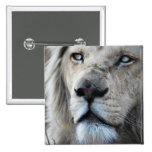 Lion listens to my heartbeat pin