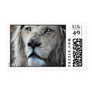 Lion listens to my heartbeat postage stamps