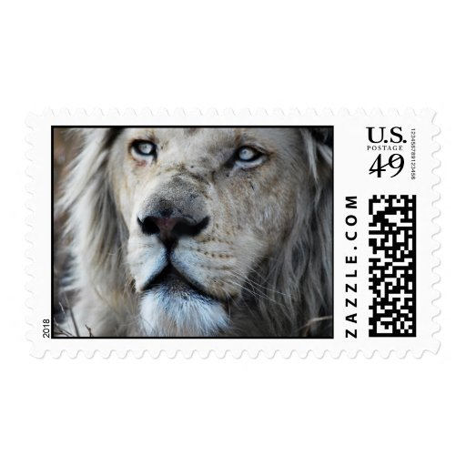 Lion listens to my heartbeat postage stamp