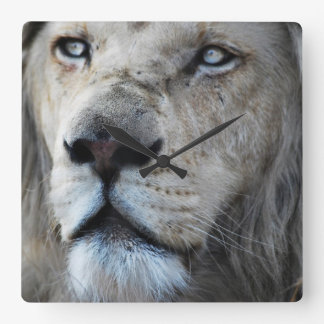 Lion listens to my heartbeat square wallclocks