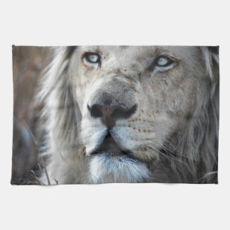 Lion listens to my heartbeat towels