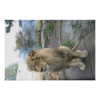 Lion Looks for Lunch Poster