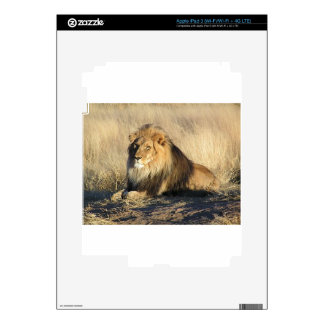 Lion lounging in Nambia iPad 3 Decal