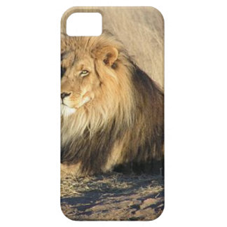 Lion lounging in Nambia iPhone SE/5/5s Case