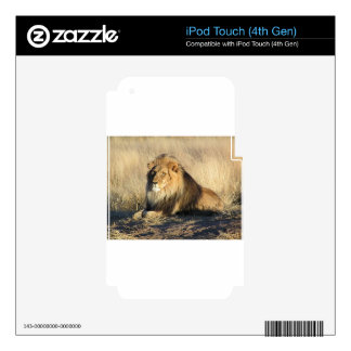 Lion lounging in Nambia Skin For iPod Touch 4G