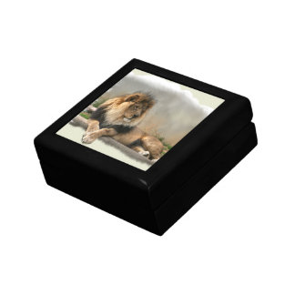 Lion Lovers King of the Jungle Jewelry Box