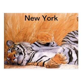 Lion Lovers Postcard
