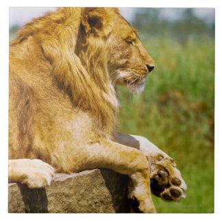 Lion lying on a rock ceramic tile