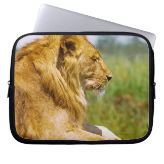 Lion lying on a rock computer sleeve