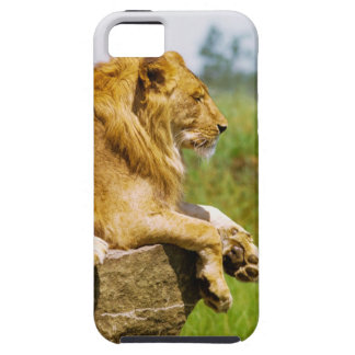 Lion lying on a rock iPhone SE/5/5s case