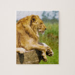 Lion lying on a rock jigsaw puzzle