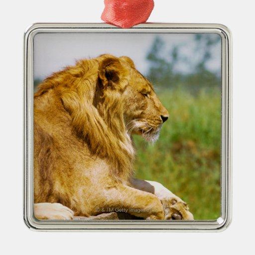 Lion lying on a rock metal ornament