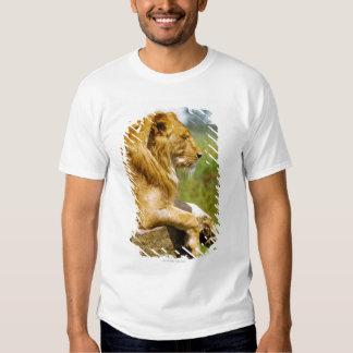 Lion lying on a rock tee shirt