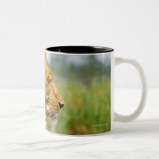 Lion lying on a rock Two-Tone coffee mug