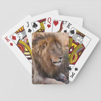 Lion Maasai Mara National Reserve, Kenya Playing Cards