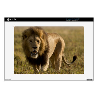 """Lion male hunting 15"""" laptop decals"""