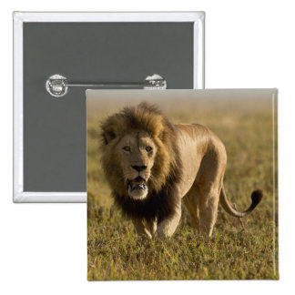 Lion male hunting pinback button