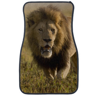 Lion male hunting car mat