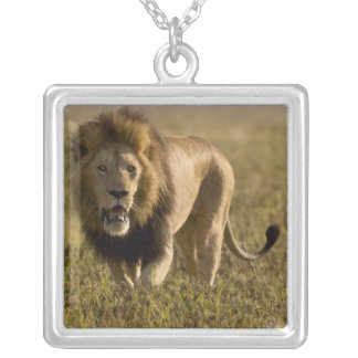 Lion male hunting jewelry