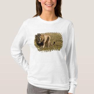 Lion male hunting T-Shirt