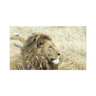 Lion Male Portrait Canvas Print