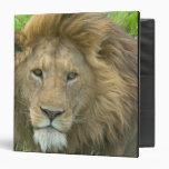 Lion Male Portrait, East Africa, Tanzania, Vinyl Binder