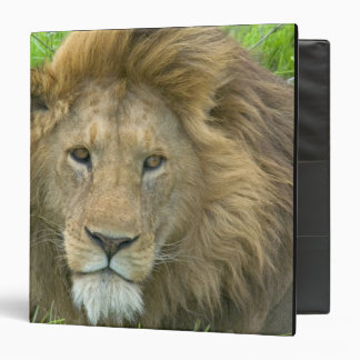 Lion Male Portrait, East Africa, Tanzania, Binder
