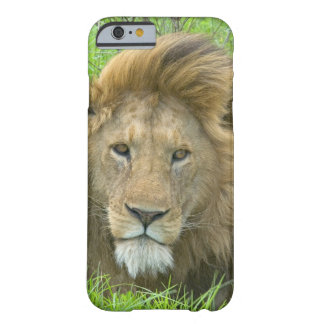 Lion Male Portrait, East Africa, Tanzania, Barely There iPhone 6 Case