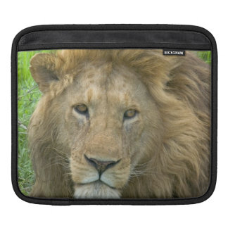 Lion Male Portrait, East Africa, Tanzania, iPad Sleeve