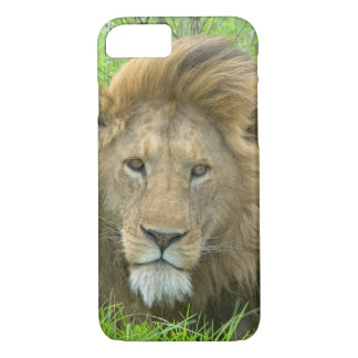 Lion Male Portrait, East Africa, Tanzania, iPhone 8/7 Case