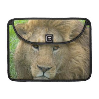 Lion Male Portrait, East Africa, Tanzania, Sleeve For MacBooks