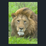 "Lion Male Portrait, East Africa, Tanzania, Photo Print<br><div class=""desc"">Lion Male Portrait,   East Africa,  Tanzania,  Ngorongoro Crater � Todd Gustavson / DanitaDelimont.com</div>"